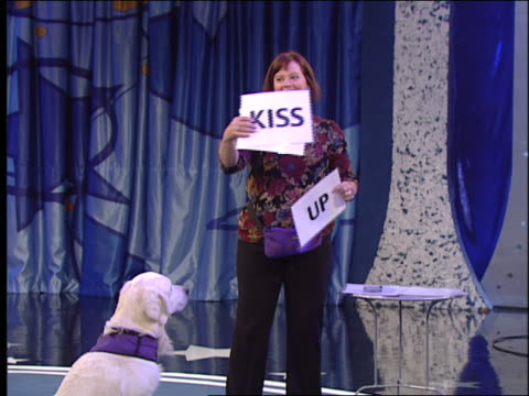an animal trainer holds signs as instructions for a white dog. - performing tricks stock videos & royalty-free footage