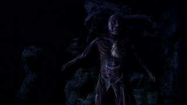 an animation depicts a human lying with transparent skin and some internal systems revealed. - 生理学点の映像素材/bロール