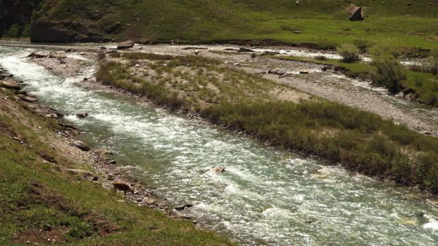 an antelope near  indus  glacier river, gangetic plain - plain stock videos & royalty-free footage
