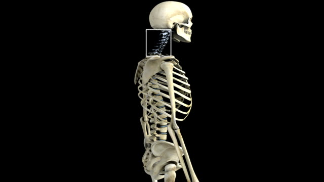an anti-clockwise rotation of the skeletal system with the cervical region of the spinal column highlighted which then fades to a detail of the cervical vertebra which then pans from left to right. - cervical vertebrae stock videos & royalty-free footage
