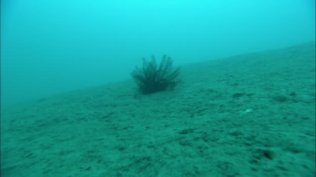 an aquatic plant rises above a barren seabed. - seabed stock videos & royalty-free footage