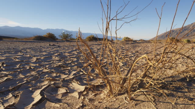 ds, ws an arid, dry riverbed in death valley, - dürre stock-videos und b-roll-filmmaterial