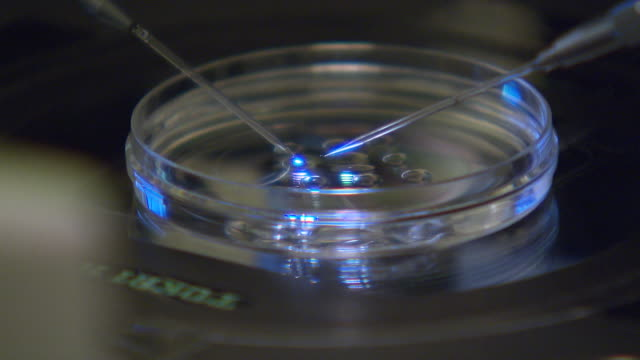 vidéos et rushes de an artificial insemination procedure being carried out in a science lab - science and technology