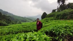 An Asia beautiful Chinese women visit tea Plantations in Cameron Highlands Malaysia, cloudy in early morning. She is very happy enjoying in nature.
