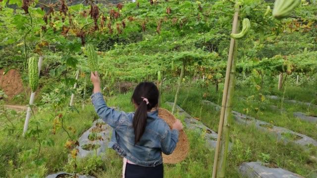 vidéos et rushes de une fille chinoise d'asie s'amuse et examine la ferme amère de gourde curieusement. - seulement des petites filles