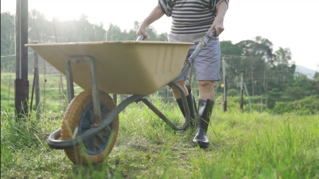an asian chinese active senior woman pushing a cart , wheelbarrow to collect her homegrown fruit and vegetable from her organic farm - gardening stock videos & royalty-free footage