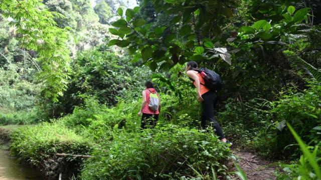 彼女の友人と川側に沿ってトレッキングジャングルの歩道を歩くアジアの中国の美しい女性 - rainforest点の映像素材/bロール
