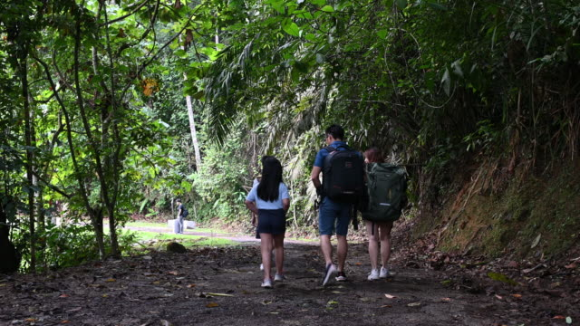 an asian chinese family of 2 children walking and hiking in tropical rain forest during weekend following a dirt road footpath - tropical rainforest stock videos & royalty-free footage