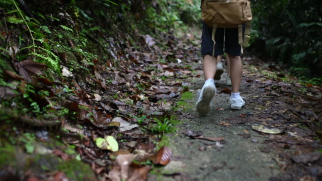 an asian chinese family of 2 children walking and hiking in tropical rain forest during weekend following a dirt road footpath - eco tourism stock videos & royalty-free footage