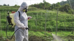 An asian chinese female farmer with protective suit spraying on bitter groud plants in the farm for disinfection