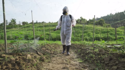 an asian chinese female farmer with protective suit spraying on bitter groud plants in the farm for disinfection - poisonous stock videos & royalty-free footage