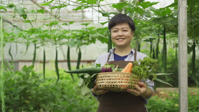an asian chinese female mid adult woman farmer in greenhouse looking at camera happily - organic stock videos & royalty-free footage