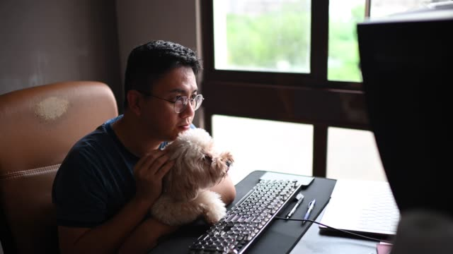 an asian chinese mid adult man talking  and communicating with his friends, family members and business partners online chatting looking at camera discussion from a computer monitor screen at home office while carrying his toy poodle dog pet - cagnolino da salotto video stock e b–roll