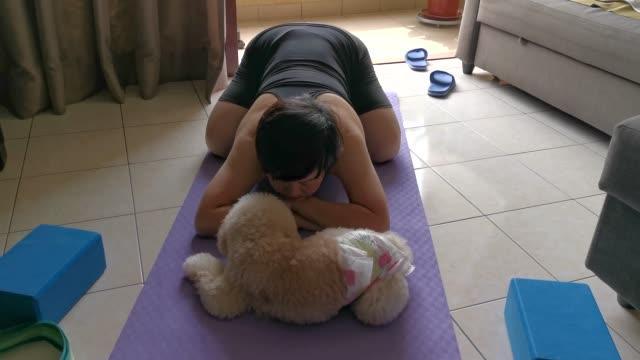 eine asiatische chinesische mid adult üben yoga-übungen zu hause, während ihr spielzeug pudel haustier hund stört sie und lecken ihr gesicht - gemütlich stock-videos und b-roll-filmmaterial