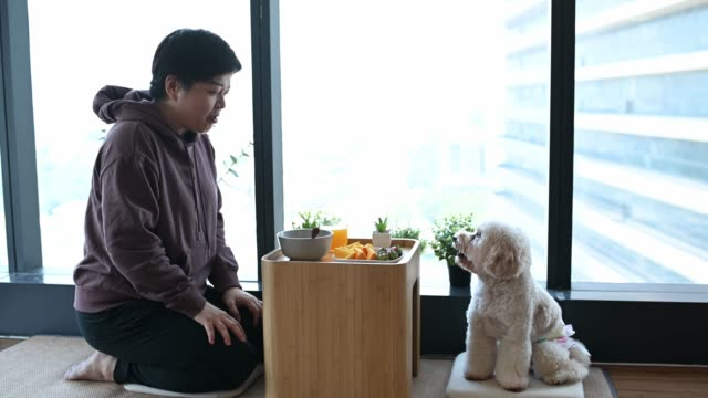 vídeos y material grabado en eventos de stock de una asiática china media mujer adulta disfrutando de su desayuno en casa en la mañana junto con su perro mascota caniche de juguete en tatami - zumo de naranja