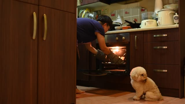 an asian chinese mid adult woman pulling cake tray from oven in kitchen baking preparing meal while her toy poodle looking and smelling it - stereotypical stock videos & royalty-free footage
