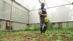 an asian chinese senior man working in their farm harvesting greenhouse watering the plant