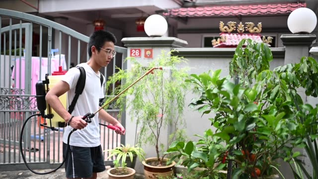 an asian chinese teenager boy spraying applying an insecticide fertilizer at his front yard garden - un ragazzo adolescente video stock e b–roll
