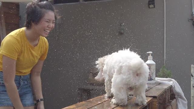 eine asiatische chinesische teenager aufräumen ihre spielzeug pudel mit wasserschlauch und spray auf ihr haustier mit wasser und shampoo spaß und bindung zeit - shampoo stock-videos und b-roll-filmmaterial