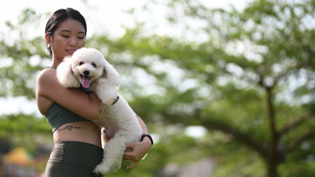 an asian chinese teenager girl having bonding time with her dog toy poodle in the public park morning while jogging - collar stock videos & royalty-free footage
