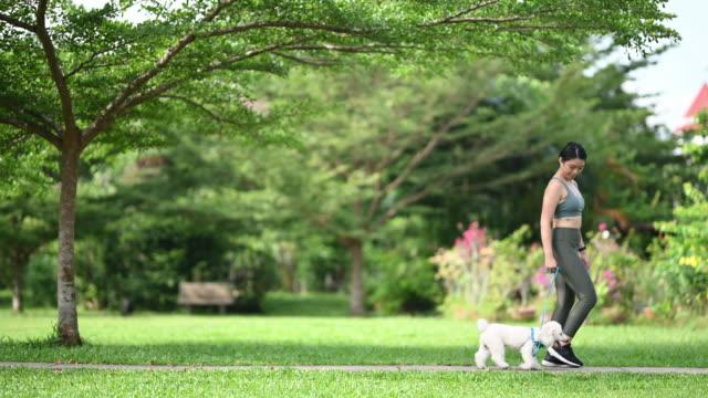 vídeos de stock, filmes e b-roll de uma adolescente asiática chinesa tendo tempo de ligação com seu poodle de brinquedo cão na manhã do parque público enquanto corria treinamento de obediência - trilha passagem de pedestres