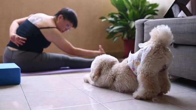 an asian mid adult woman workout yoga at home balcony during the restricted movement order in malaysia with her toy poodle pet animal - posture stock videos & royalty-free footage