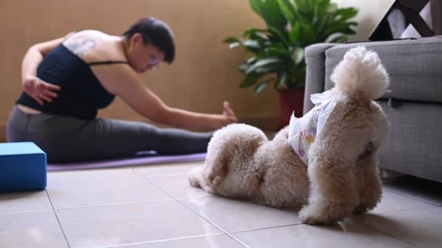 eine asiatische mittelerwachsene Frau Workout Yoga zu Hause Balkon während der eingeschränkten Bewegung Ordnung in Malaysia mit ihrem Spielzeug Pudel Haustier Tier