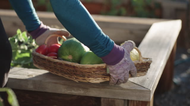 vídeos de stock e filmes b-roll de an attractive caucasian woman in her fifties places vegetables into a basket and then picks the basket up from a raised wooden vegetable bed - horta
