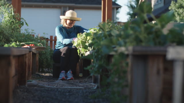 an attractive caucasian woman in her fifties sits on a crate amongst her raised vegetable beds and harvests vegetables beside her house on a bright, sunny day - gardening stock videos & royalty-free footage