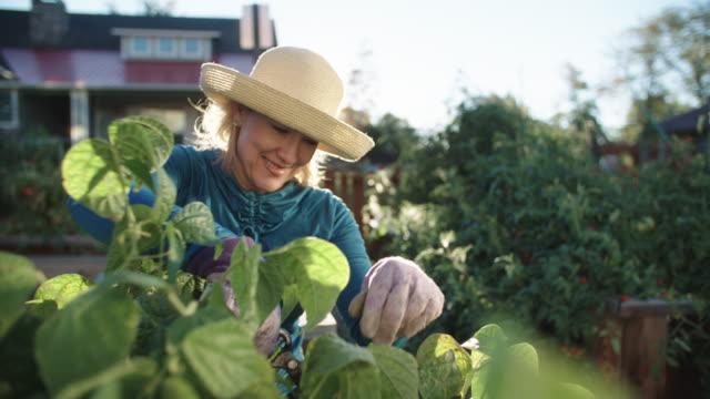 vidéos et rushes de une jolie femme de race blanche dans sa cinquantaine tend à son jardin, à côté de sa maison, sur une belle journée ensoleillée - jardin potager