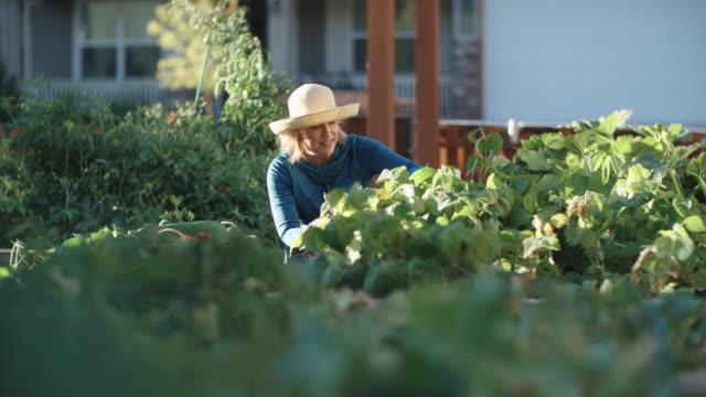 stockvideo's en b-roll-footage met een aantrekkelijke kaukasische vrouw in haar jaren vijftig heeft de neiging om haar tuin naast haar huis op een heldere, zonnige dag - alleen oudere vrouwen