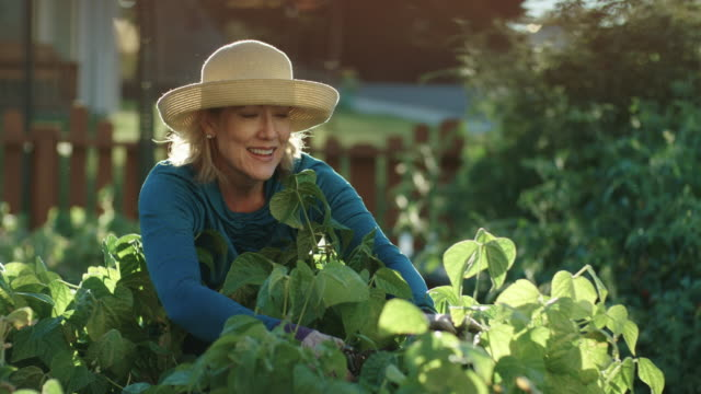 an attractive caucasian woman in her fifties tends to her garden beside her house on a bright, sunny day - giardinaggio video stock e b–roll