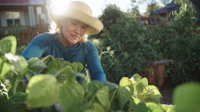 an attractive caucasian woman in her fifties tends to her garden beside her house on a bright, sunny day - gardening glove stock videos & royalty-free footage