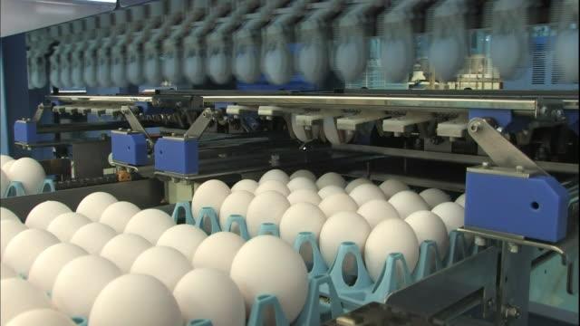 vídeos de stock, filmes e b-roll de an automated sort machine loads graded eggs into cartons. - maquinaria de fábrica
