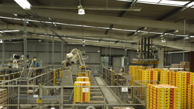 An automatic pallet stacker lifts crates of kiwifruits at a packing plant in New Zealand.
