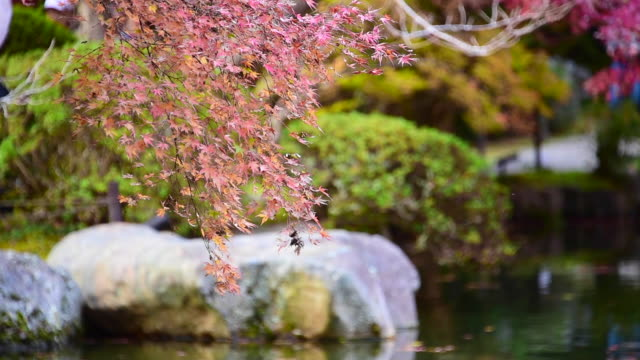 an autumn leaf in the foreground and blur on back ground - satoyama scenery stock videos & royalty-free footage