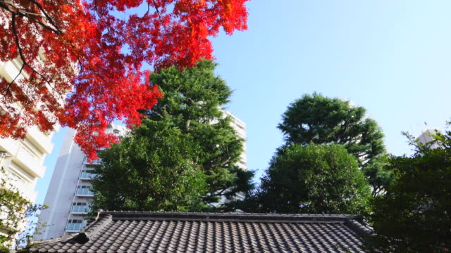 An autumn leave tree stands beside the Kawara Gate (Roof Tile Gate) in Kyu-Furukawa Gardens Kita-ku Tokyo on December 03 2017. High-rise residential buildings can be seen behind.