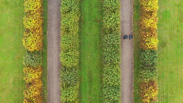 an autumn walk in the park viewed from above - symmetry stock videos & royalty-free footage
