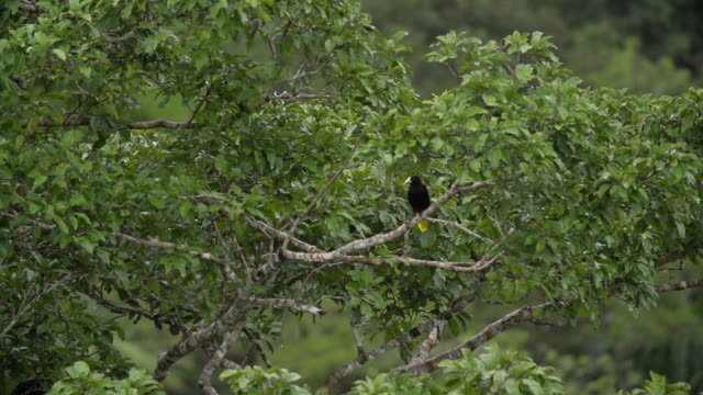 An bird sits on perch, then takes off from canopy tree