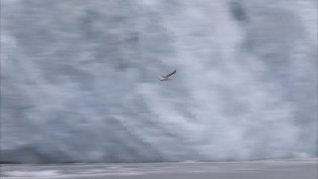 an eagle flies along the shore of the kenai peninsula. - kenai peninsula stock videos & royalty-free footage