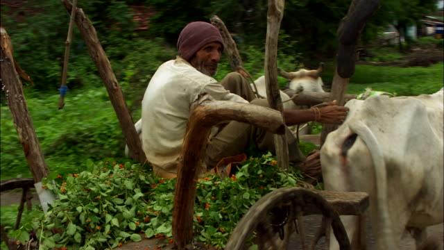 an east-indian man drives an ox cart down a rural road. available in hd. - ox cart stock videos & royalty-free footage