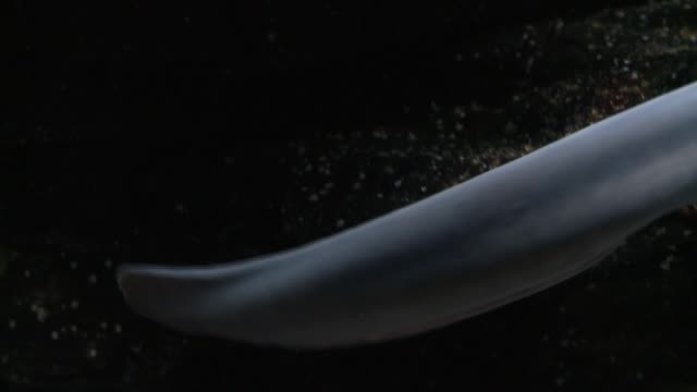 An eel glides over rocky seabed. Available in HD.