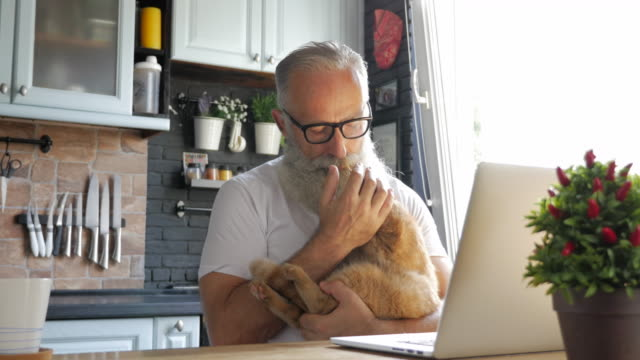 an elderly bearded man stroking and kissing a cat in the kitchen - pets stock videos & royalty-free footage