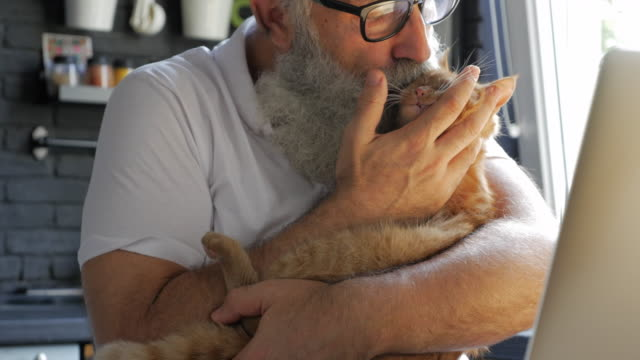 an elderly bearded man stroking and kissing a cat in the kitchen - portability stock videos & royalty-free footage
