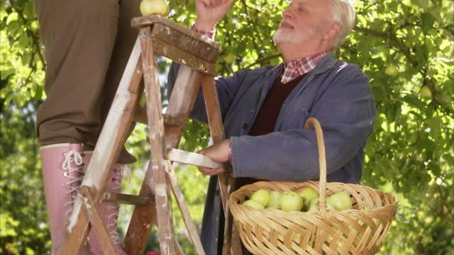 vidéos et rushes de an elderly couple picking apples a sunny day sweden. - échelle