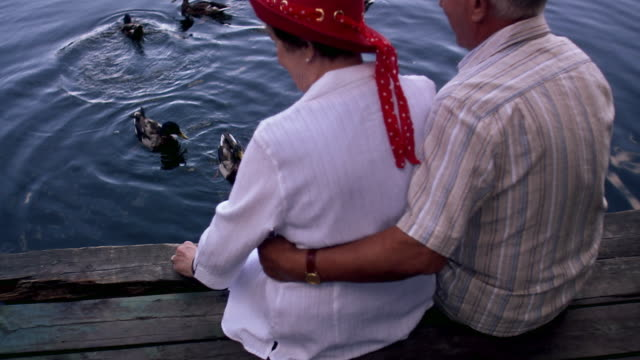 an elderly couple sitting on a jetty feeding ducks stockholm sweden. - kleine gruppe von tieren stock-videos und b-roll-filmmaterial