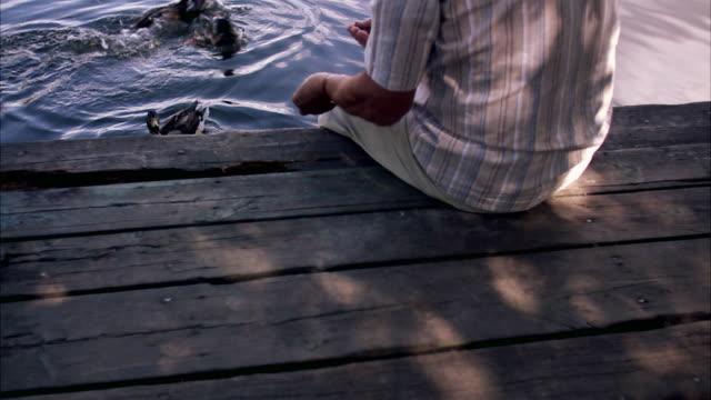 vídeos de stock e filmes b-roll de an elderly man sitting on a jetty feeding ducks stockholm sweden. - alimentar