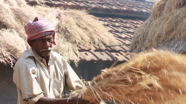 of an elderly man who is threshing straw in a backyard with several shacks in the background in a rural area about 300 kilometer from kolkata. - strohdach stock-videos und b-roll-filmmaterial