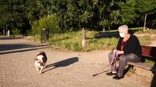 vídeos de stock e filmes b-roll de an elderly woman using a protective mask sitting on a bench with her dog on may 20, 2020 in madrid, spain. some parts of spain have entered the... - banco assento