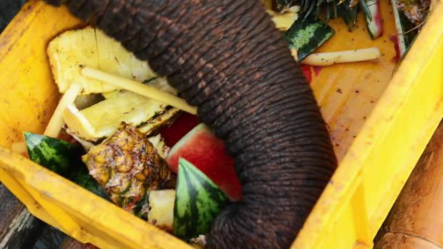 an elephant eating fruits with their trunk by river kwai noi. kanchanaburi thailand - 厚皮動物点の映像素材/bロール